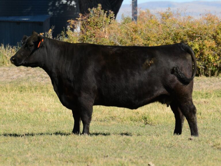 Lot 32, Barstow Cash Daughter
